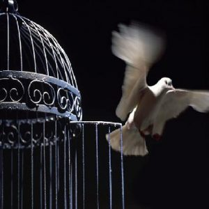 bird-fly-out-of-cage- awallaceblog