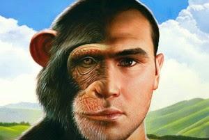 chimp-human-300x201